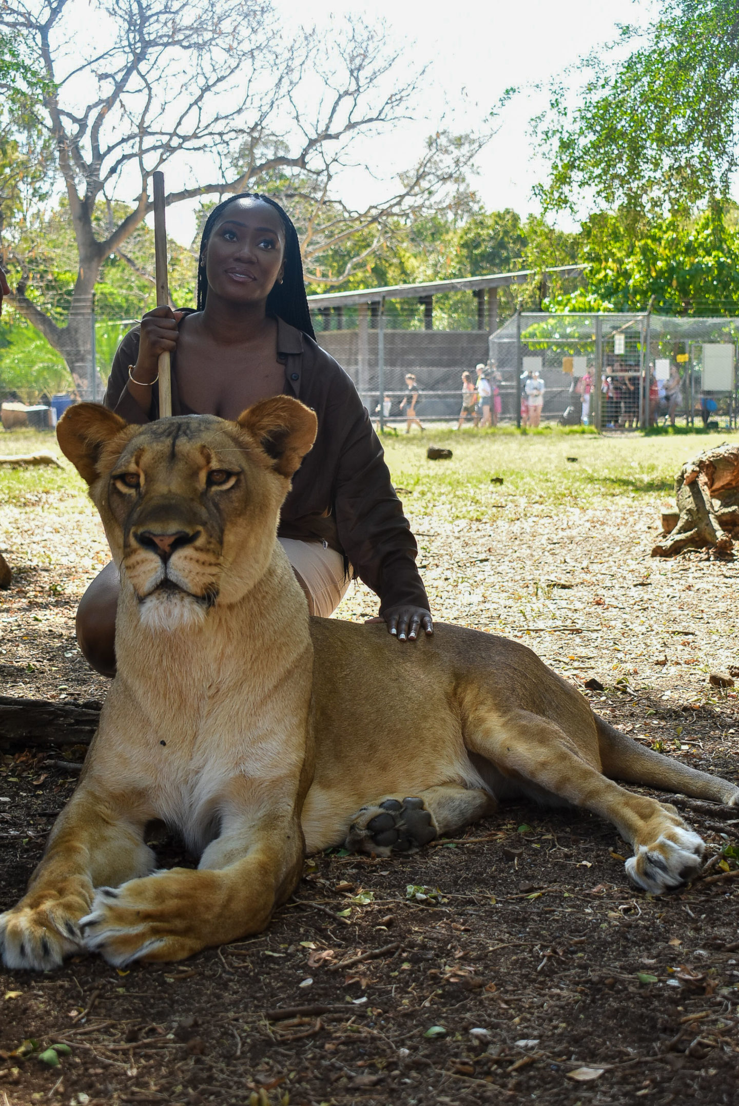 Casela mauritius walk with lions lion encounter travel blog