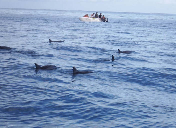 spinner dolphins mauritius
